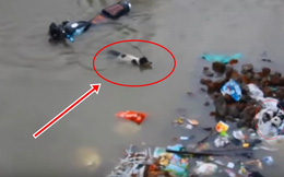 Chó lang thang ngụp lặn giữa dòng nước lũ để bơi đến bãi rác, những gì diễn ra sau đó khiến bao người rơi nước mắt