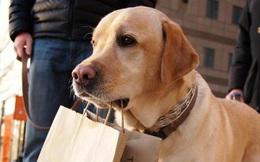 """Chó cưng qua đời sau 12 năm bầu bạn, chủ nhân bất ngờ khi nhận được """"gia tài""""  hàng trăm triệu do con vật để lại"""