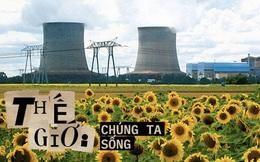 Đồng hoa hướng dương khổng lồ mọc lên ngay cạnh nhà máy Fukushima sau thảm họa hạt nhân ''chết chóc nhất lịch sử'': Chuyện bí ẩn gì đây?