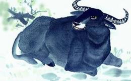 Tử vi tuần mới của 12 con giáp: Tỵ phát tài, Mão tiền trĩu túi, Sửu đối mặt với hung vận...