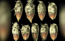 """Bất ngờ phát hiện """"kho báu"""" 230 triệu năm nằm trong phân khủng long hóa thạch"""