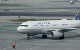 Clip: Chim bay loạn xạ trong khoang hành khách khiến chuyến bay bị chậm giờ