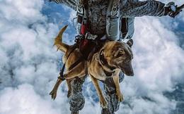 Chó nghiệp vụ trong quân đội Nga có thể đổ bộ từ độ cao 4.000m