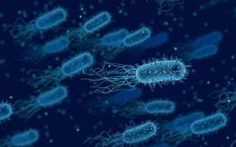 Vật liệu tự nhiên bền hơn thép, dai hơn kevlar đã bị vượt mặt bởi vi khuẩn