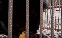 """Mua chó Ngao Tây Tạng về nuôi, 2 năm sau gia đình sợ hãi phát hiện """"thân thế"""" thực sự của con vật"""