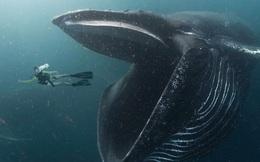 Sự kiện hi hữu, độc nhất vô nhị: Người đàn ông bị nuốt vào bụng cá voi và pha thoát chết thần kỳ!