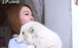 """Mua chó Nhật về nuôi, 3 tháng sau con vật """"hiện nguyên hình"""" khiến cô gái phải cuống cuồng nhờ giúp đỡ"""