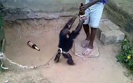 Cho khỉ tập uống bia, một thời gian sau người đàn ông khốn khổ ngay cả khi đã thả nó về rừng
