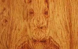 Tưởng mọc dại trong rừng, chẳng ai ngờ loại gỗ này sánh ngang gỗ đàn hương: Quý giá hơn vàng, ai ai cũng săn lùng!
