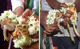 Cả làng góp tiền tổ chức đám cưới cho cặp đôi ếch để cầu mưa, hai tháng sau phải ly dị gấp vì lũ cuốn trôi 9.000 ngôi nhà