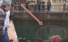 Thấy sinh vật kỳ quái xuất hiện bên bờ biển, người đàn ông nhảy xuống nước kiểm tra rồi không khỏi kinh ngạc với hình ảnh chụp được