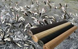 Dùng mành và thứ bột bí ẩn nhìn như xi măng đi bắt cá, thu được mẻ lưới to!