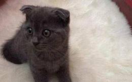 """Gửi mèo cho bà nội nuôi, 1 năm sau về nhận lại, chàng trai """"đứng hình"""" trước bộ dạng của con vật"""