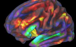 Phát hiện mở ra hiểu biết mới về nhận thức: Não phân tích dữ liệu theo hai cách khác nhau khi ở hai trạng thái đứng và nằm