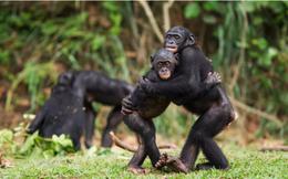 Loài vật ôm nhau để bày tỏ tình cảm như con người?