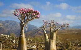 Những loài cây khiến con người có thể mất mạng