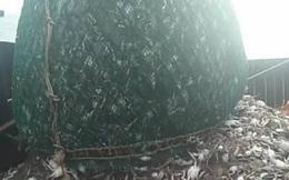 Kéo được mẻ lưới nặng bất thường lên bờ, nhìn thấy những thứ bên trong, ngư dân mừng như bắt được vàng