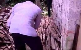 Hoảng hốt phát hiện 1 con rắn trong đống gỗ sau nhà, thứ mà con vật nhả ra từ trong miệng càng khiến ông lão chết khiếp