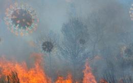 Khói cháy rừng khiến con người dễ nhiễm COVID-19 hơn nhưng chúng ta lại không thể trốn chạy khỏi chúng