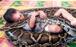 Đứa trẻ ôm trăn khổng lồ, lọt thỏm trong thân hình đồ sộ của con vật khiến ai nấy rụng rời chân tay, sự tình phía sau là gì?