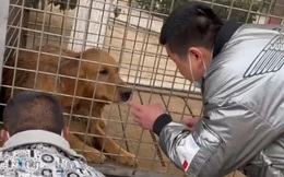 Được chủ nhân giải cứu trước lúc bị đưa vào lò mổ, chú chó làm ra 1 việc khiến nhiều người không thể cầm lòng