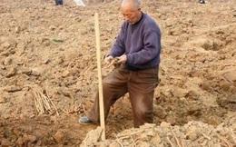 Ông lão đào được thanh kiếm khắc 3 ký tự đặc biệt nhưng lại đem về làm bếp, người dân phỏng đoán: Là Thượng phương bảo kiếm?