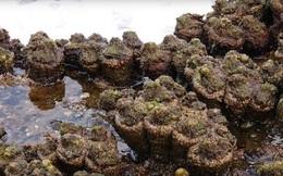"""Bổ đôi """"cục đá"""" nhặt được bên bờ biển, người đàn ông sốc khi biết đó là sinh vật có thể chuyển giới!"""