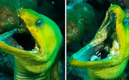 """Lặn xuống đáy biển, thợ lặn kinh hãi đụng độ """"quái vật"""", bức ảnh được chụp lại khiến nhiều người rùng mình"""