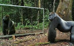 Tại sao con người có thể nhận ra bản thân mình trong gương, nhưng hầu hết các loài động vật trên hành tinh của chúng ta lại không?