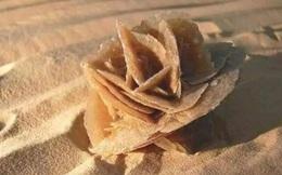 Có một loại đá đặc biệt ở sa mạc, hướng dẫn viên khuyên nhìn thấy hãy nhặt lên ngay kẻo 'hối hận cả đời'