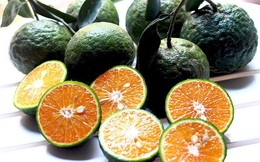 """Loại quả giàu vitamin C bán đắt như tôm tươi mùa dịch, giá tăng gấp đôi, khách đặt mua mấy lần đều """"hụt"""""""