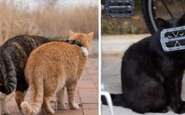 Bộ ảnh cuộc sống thường ngày của 500 anh em mèo hoang cute nhưng không kém phần lôm côm ở Nhật Bản