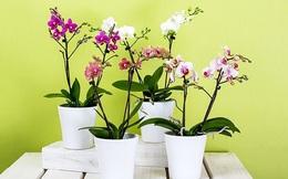 Vị trí trồng cây phong thủy mang lại tài lộc, may mắn cho gia chủ