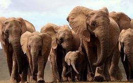 Trong 100 năm qua, những sinh vật nào đã tiến hóa rõ ràng?