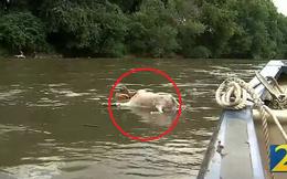 Thấy vật thể lạ trôi trên sông, người đàn ông đến gần xem sao, quan sát kỹ thì lập tức sửng sốt