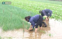 Dân hối hả neo thuyền, dầm mình trong nước gặt lúa, thu hoạch rau chạy bão Côn Sơn