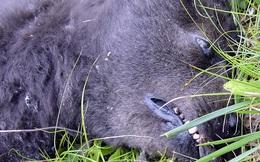 Con vật bị ô tô đâm chết, người dân tới xem rồi kinh hãi khi quan sát kỹ xác của nó: Con gì mà gớm ghiếc tới vậy?