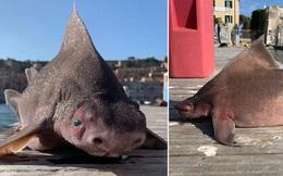 Thủy thủ bắt được sinh vật thân cá mập mặt lợn nái, chụp ảnh khoe lên mạng mà suýt đi tù