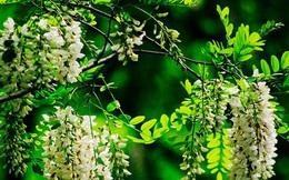 8 cây cảnh tốt cho phong thủy, trồng trước nhà giúp xua đuổi tà khí, thu hút tài lộc