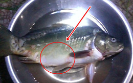 Mua con cá ngoài chợ về chế biến món ăn, người đàn ông phát tài chỉ sau 1 đêm nhờ những thứ vớ được trong bụng con vật
