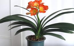 Theo phong thủy có 3 loại cây nên đặt trong nhà giúp gia chủ làm ăn hanh thông, tăng vượng khí và sống trường thọ mà bạn không nên bỏ qua