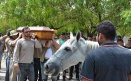 Chủ nhân đã qua đời, ngày đưa tang, chú ngựa chạy thẳng tới chỗ quan tài và làm 1 việc khiến ai cũng rơi nước mắt