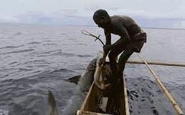 Cận cảnh màn săn cá mập 'khủng' bằng tay không của thổ dân vùng Melanesia