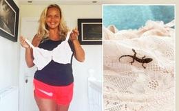 Đi du lịch và mua đồ về mới biết đã mang theo 1 con vật nhỏ, bà mẹ thấy may vì đã không tự ý thả nó về thiên nhiên