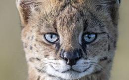Tận dụng thời gian mắc kẹt ở Kenya do đại dịch, nhiếp ảnh gia tạo ra album ảnh động vật hoang dã ấn tượng