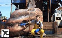 Đây là những quái vật biển sâu được một ngư dân người Nga đưa lên khỏi mặt nước