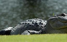 Tìm thấy cổ vật hàng nghìn năm trong bụng cá sấu