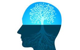 Mindset là gì và vì sao mindset là công cụ thành công quan trọng nhất?