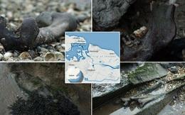 'Hòn đảo chết chóc' kinh dị cấm khách du lịch ở Anh