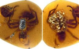 Phát hiện mẹ con đàn nhện nguyên vẹn trong miếng hổ phách 99 triệu năm